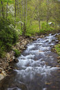 A mountain stream in the early spring lush green leaves Royalty Free Stock Images
