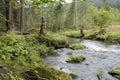 Mountain Stream Flowing Throug...