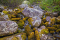 Mountain stream flowing among the mossy stones. Royalty Free Stock Photo
