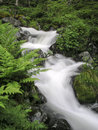 Mountain stream flowing water of Royalty Free Stock Image
