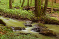 Mountain stream in a forest Royalty Free Stock Photography