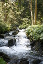Mountain stream through forest Royalty Free Stock Photo