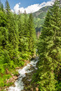 Mountain stream in a forest summer Stock Image