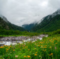 Mountain stream landscape in svaneti georgia Royalty Free Stock Photo