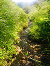 Mountain stream in middle of blooming green fields Royalty Free Stock Photo