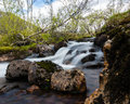 Mountain stream in Norway Stock Images