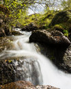 Mountain stream in Norway Stock Image