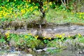Mountain stream in the open air on a green meadow with yellow flowers, concept of traveling in the wild, copy spacen Royalty Free Stock Photo