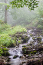 Mountain stream with rapids forest wildlife Royalty Free Stock Photo