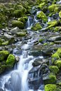 Mountain Stream Theme Stock Images