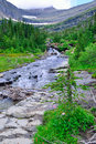 Mountain stream and wild alpine flowers on a high alpine trail in glacier national park Royalty Free Stock Photo