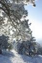 Mountain Sunrise 5 Royalty Free Stock Photo