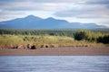 Mountain and taiga at kolyma river russia outback magadan yakutia region Royalty Free Stock Photos