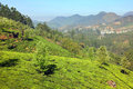 Mountain tea plantation landscape in India Stock Photos