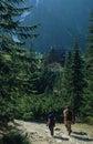 Mountain trail Stock Image