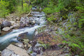 Mountain Trout Stream in Virginia Royalty Free Stock Photo