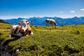 Mountain vacation at the lake in Austria Stock Image