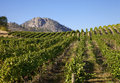 Mountain Vineyard Stock Photography