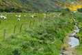 Mountain vistas and grazing sheep Royalty Free Stock Photo