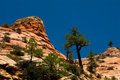 Mountain in Zion National Park Royalty Free Stock Photography