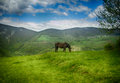 Mountaine environment landscape photography from bosnian mountain place jajce Stock Images