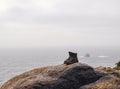 Mountaineering boots sculpture on a rock near the sea in santiago de compostela trail Stock Photos