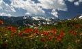 Mountainous glade