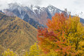 Mountains with autumn colors Royalty Free Stock Photo