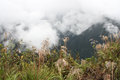 Mountains in clouds, Death road, Yungas, Bolivia Royalty Free Stock Photo