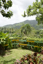 Mountains in the dominican republic vegetation and plants found Stock Photo