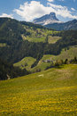 Mountains and fields of yellow dandelions in the dolomite italy Royalty Free Stock Photography