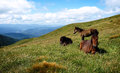 Mountains landscape horses in on cloudy sky background carpatians Stock Photos