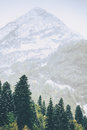 Mountains peak and Coniferous Forest Landscape Royalty Free Stock Photo