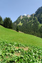 Mountains in switzerland meadow and Stock Image