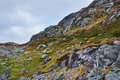 Mountainside with grass and stones norwegian covered in green boulders spread all over Royalty Free Stock Photos