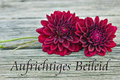 Mourning card with red dahlia Royalty Free Stock Photo