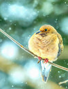 Mourning dove in snow Royalty Free Stock Photo
