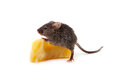 Mouse and cheese isolated on a white background Royalty Free Stock Photo