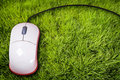 Mouse on grass Stock Image