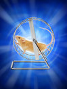 Mouse Hamster Exercise Wheel Stock Photos