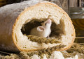 Mouse in a loaf Stock Image