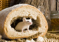 Mouse in a loaf Royalty Free Stock Images