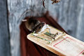 Mouse in a mousetrap little gray wooden country house winter Royalty Free Stock Image
