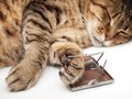 Mouse nightmare cat asleep after playing with mousetrap Stock Photos