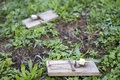 Mouse traps on garden lawn Stock Photography