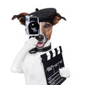Movie director dog Royalty Free Stock Photo