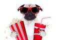 Movie dog Royalty Free Stock Photo