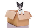 Moving box dog mail in a very big Stock Photos