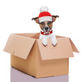 Moving box winter dog Royalty Free Stock Photo