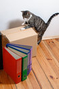 Moving day - cat and cardboard boxes in room Royalty Free Stock Photo